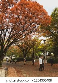 OSAKA PERFECTURE, JAPAN-NOVEMBER 9, 2018: Unidentified people enjoying autumn season colours at Osaka Castle Park in Osaka, Japan.
