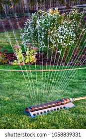Oscillating sprinkler watering fresh mown lawn and flower bed in the evening autumn garden