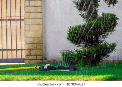 Oscillating sprinkler watering trees