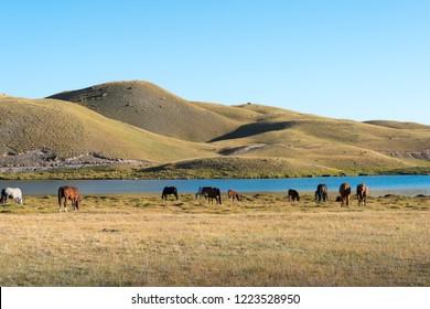 Osh, Kyrgyzstan - Aug 20 2018: Morning Landscape of Tulpar Kol Lake in Alay Valley, Osh, Kyrgyzstan. Pamir mountains in Kyrgyzstan.
