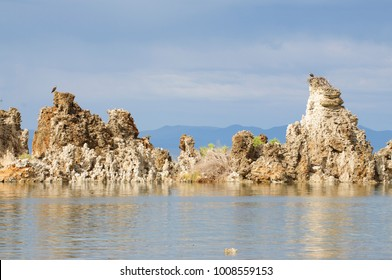 Osprey nesting on top of tufas in Mono Lake