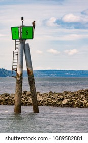 An Osprey on a chanel marker looks over the water. Taken in May 2018 at the Port of Everett Marina in Washington State.