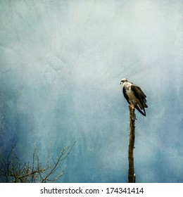 An osprey on a tall post surveying the area for food