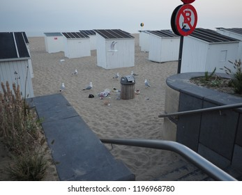 Ostend, Belgium - 7 August 2018: Gulls pick up food from a garbage bin on the beach of Ostend.
