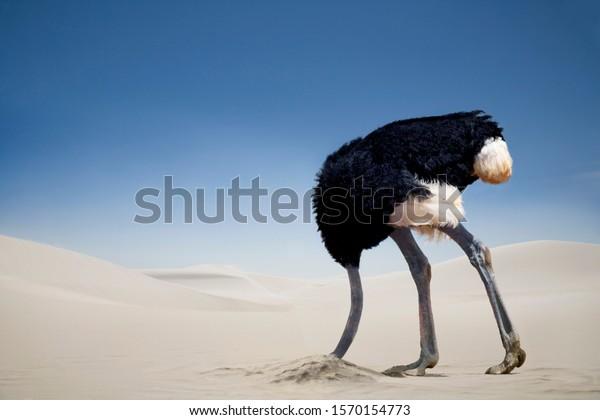 ostrich-burying-head-sand-tsavo-600w-157