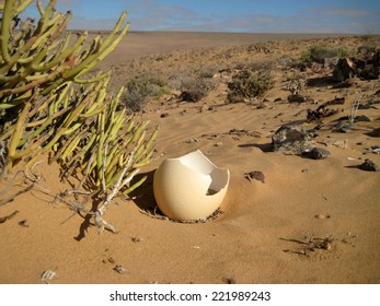Ostrich egg shell in desert