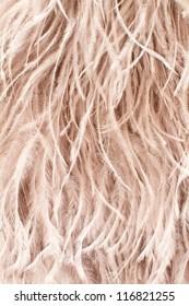 Ostrich feather beige background.
