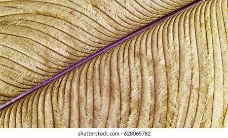 The ostrich feather. Brown-green ostrich feather under high magnification.