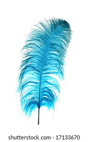 Ostrich feather dyed blue against a white background