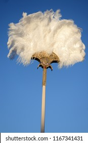 an ostrich feather fan stands out against a blue sky