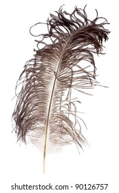 Ostrich feather on white background