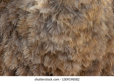 Ostrich feather texture or background