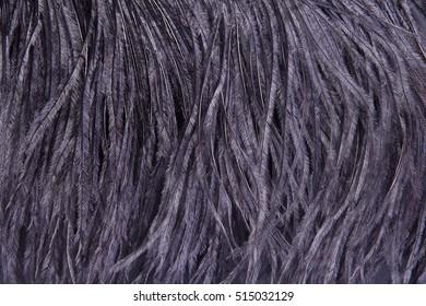 ostrich feathers, black texture, fragment women's dresses