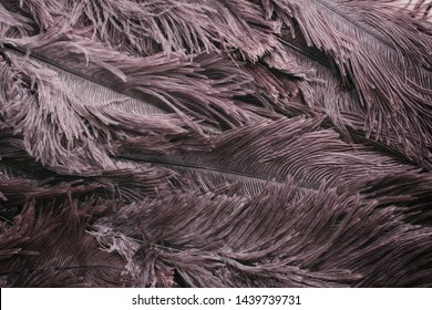 Ostrich feathers texture background. Close-up details.