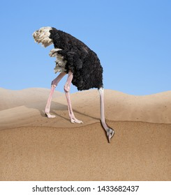 ostrich with head burying in sand concept