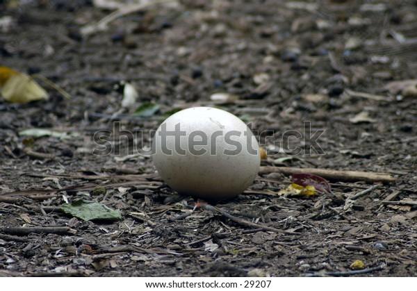 Ostritch egg.