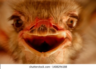 An ostritch that is smiling wildly