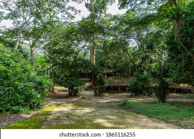 Osun-Osogbo Sacred Grove in Nigeria. A sacred forest along the banks of the Osun river just outside the city of Osogbo in Osun State. Cultural landscape of undisturbed forest.