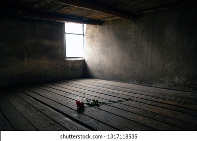 Oswiecim, Auschwitz-Birkenau, Poland/February 10, 2019 ; Rose on a prison bed. Prison bed in a barrack in the Auschwitz - Birkenau concentration camp. Death barrack, death block.