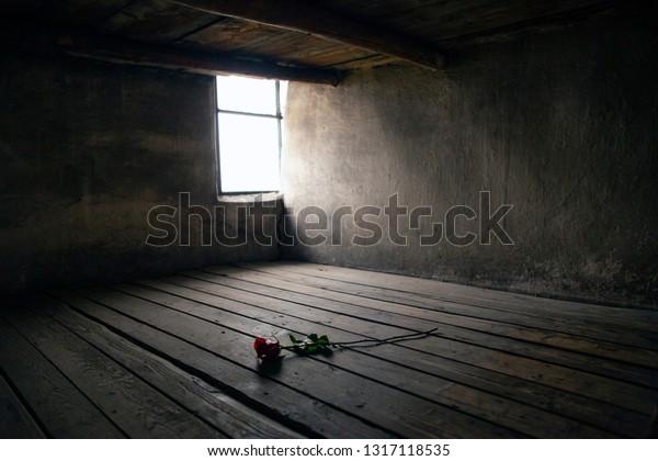 Oswiecim, Auschwitz-Birkenau, Poland/February 10, 2019 ; Rose on a prison bed. Prison bed in a barrack in the Auschwitz - Birkenau concentration camp. Death barrack, death block.