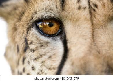 Otjiwarongo cheetah conservation in Namibia