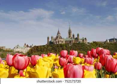 Ottawa Parliament Hill with Library of Parliament with yellow and pink tulip. Canadian tulip festival is a tulip festival, held annually in May in Ottawa, Ontario, Canada.