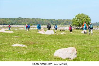Ottenby, Sweden - May 27, 2017: Environmental documentary. Group of hikers walking along limestone wall in barren green landscape. Sheep grazing in meadow.