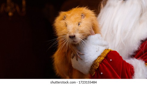 the otter is in the hands of santaclaus