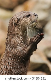 Otter Hands Images Stock Photos Vectors Shutterstock