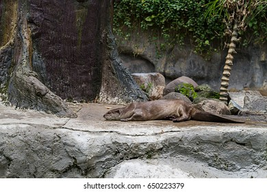 Otter at zoo.