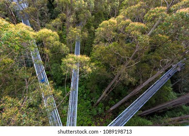 Otway Fly Treetop Adventures treetop walk Melbourne Australia Great Ocean Road
