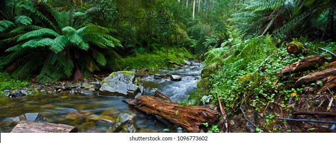 Otways Rainforest, Vic, Australia