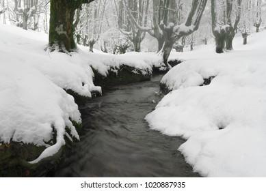 Otzarreta beech forest in winter, Gorbea Natural Park, Vizcaya, Spain
