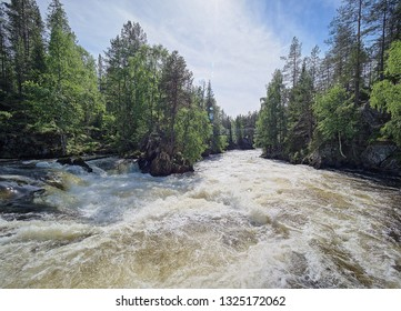 Oulanka river and the majestic rapids at the Oulanka National Park in Kuusamo, Finland. Green forest framing the flowing water. Finnish nature on a beautiful, sunny summer day perfect for hiking.