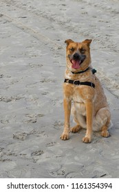 Our family pet, posing on the Hilton Head Island, SC beach in March .