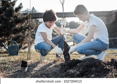 Our nature. Joyful nice positive boys holding a tree and planting it while helping the environment