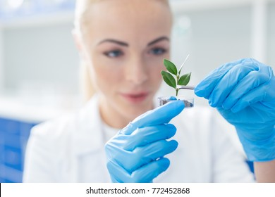 Our nature. Selective focus of a plant being put into soil by positive smart female biologist