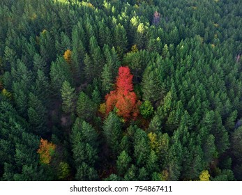 Out of the crowd! The autumn beauty in Macedonia. Aerial photography.