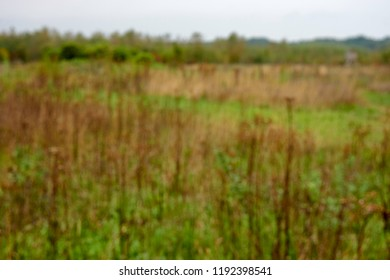 Out of focus blurred uncultivated nature reserve with green grass, brown faded plants. In background green foliage and blue and white sky. Clouded, no sun, no shadows.