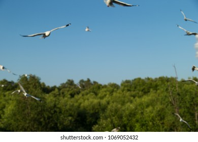 Out of Focus Flying Seagull, Sea Gulls in thailand, Sea Gull in south east asia. A flock of common black headed gulls, Chroicocephalus Ridibundus, sea gulls, flying over a beach in a clear blue sky