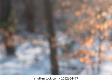 Out of focus wintery forest on winter morning with leaves and sn