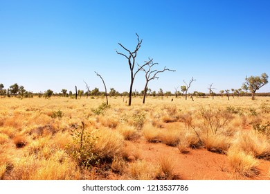 Outback Scene, Uluru-Kata Tjuta National Park, Northern Territory, Australia