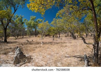 Outback Scenery, Bushland, Queensland, Australia