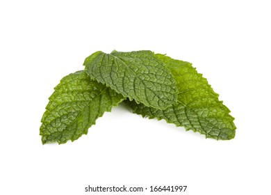 outbreaks of herbs for cooking isolated on white background, mint