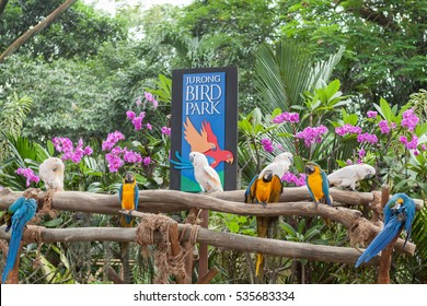 Outdoor board of Jurong Bird Park, Singapore, August 15, 2012, parrots walking around, sylvan shadowy green trees behind