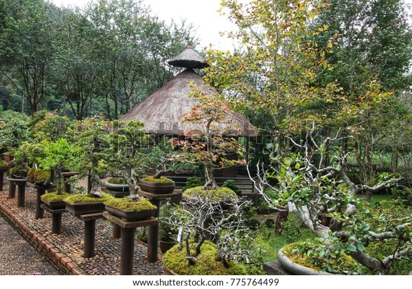 Outdoor Bonsai Display Tables Stock Photo Edit Now 775764499