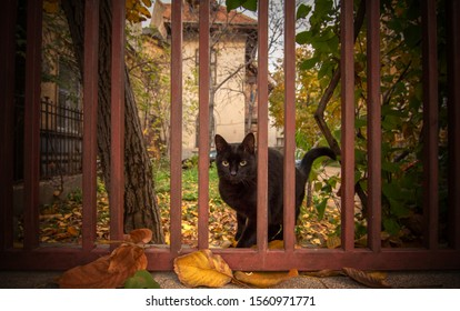 Outdoor cat portrait on the fence.