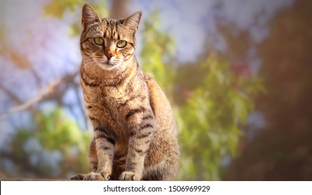 Outdoor cats portraits with bokeh backgrounds in nature.
