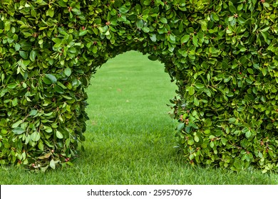Outdoor horizontal shooting hedges with grass and arch