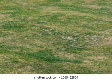 outdoor lawn background